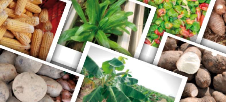 IDIAP promueve seguridad alimentaria en Comarcas Indígenas