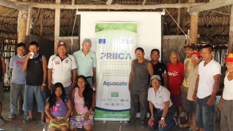 IDIAP capacita a productores de aguacate en Darién