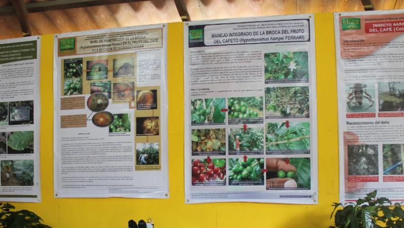 En la feria de las flores y el café el IDIAP ofrece tecnología e innovación