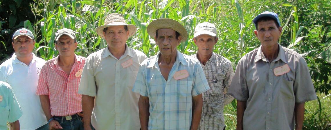 En la Zumbona en Veraguas productores transfiere tecnología de IDIAP