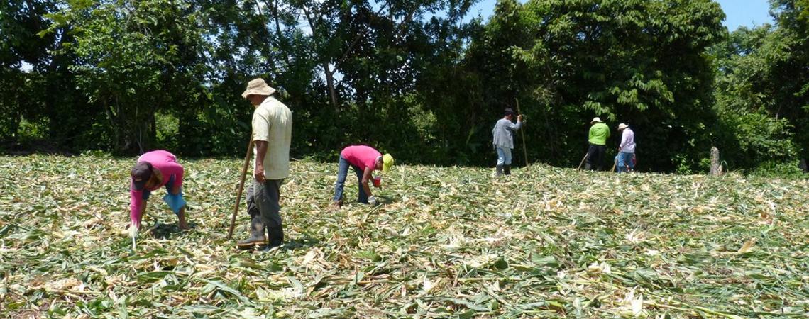 IDIAP expone sobre agricultura de subsistencia
