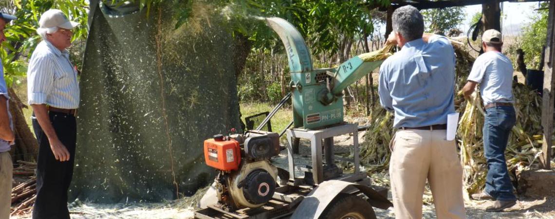 IDIAP y MIDA capacitan a productores pecuarios, sobre alternativas alimenticias en época de crisis