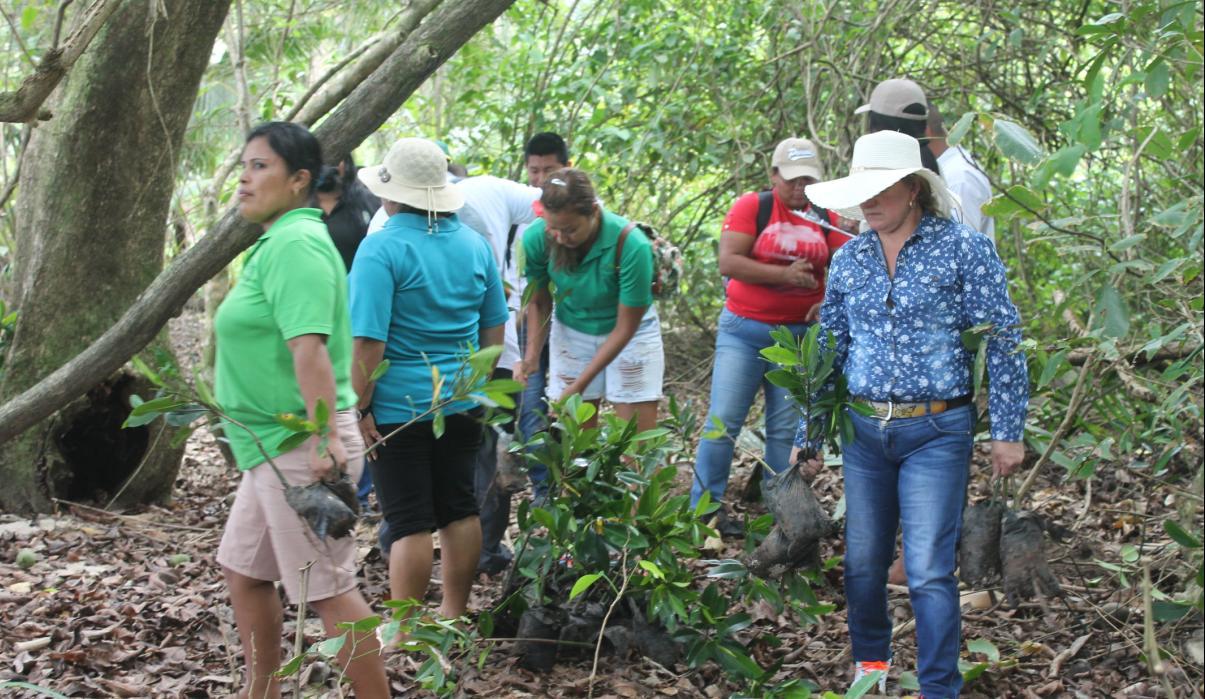 Isla Zapatilla 1 es reforestada por el IDIAP