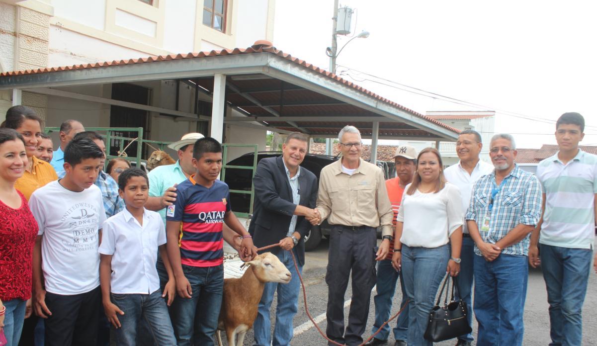 IDIAP entrega ovinos a la Gobernación de Coclé