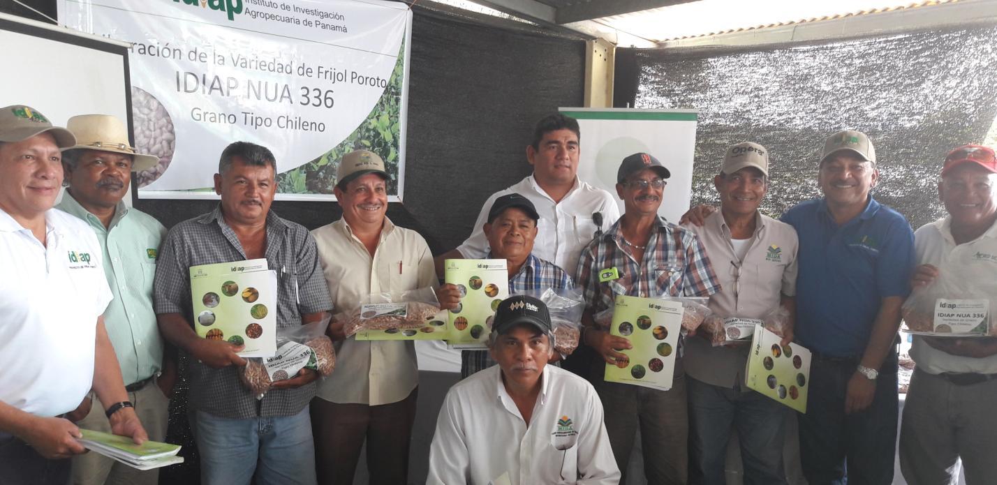 Nueva variedad de frijol poroto para los agricultores