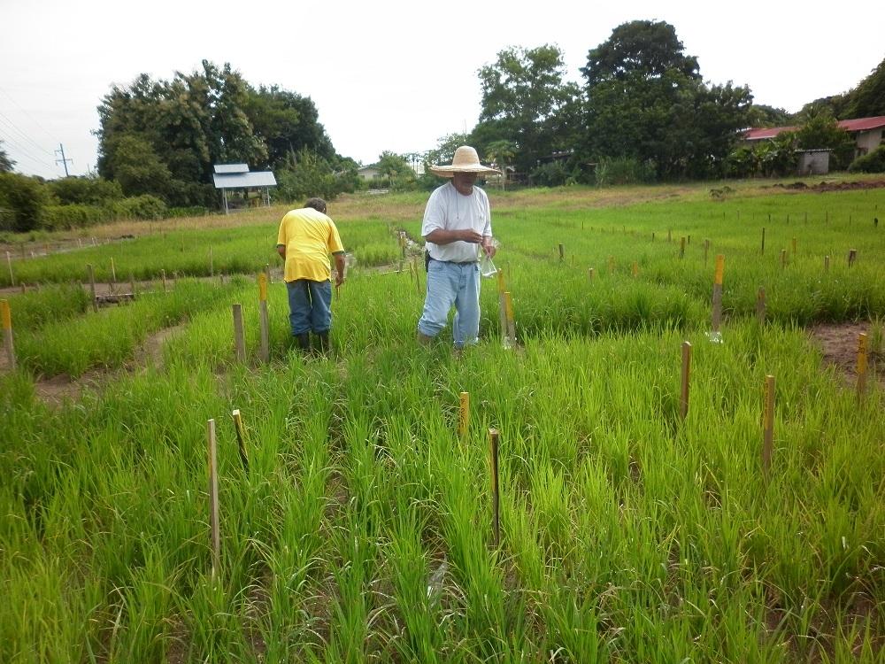 IDIAP implementa uso pacífico de la tecnología nuclear en la agricultura