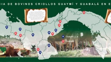 Guaymí y Guabalá, ancestrales bovinos criollos