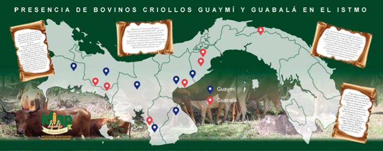 Bovinos criollos ancestrales: razas Guabalá y Guaymí