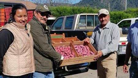 Productor chiricano de semillas de papa, recibe variedad IDIAP – Roja 17