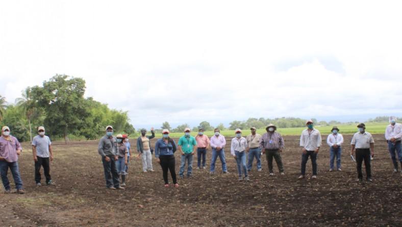 Tecnologías para el cultivo de arroz, en manos de sus usuarios